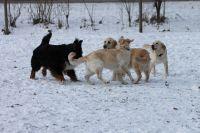 hunde_09